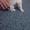 Продаются щенки китайской хохлатой собаки #1381357